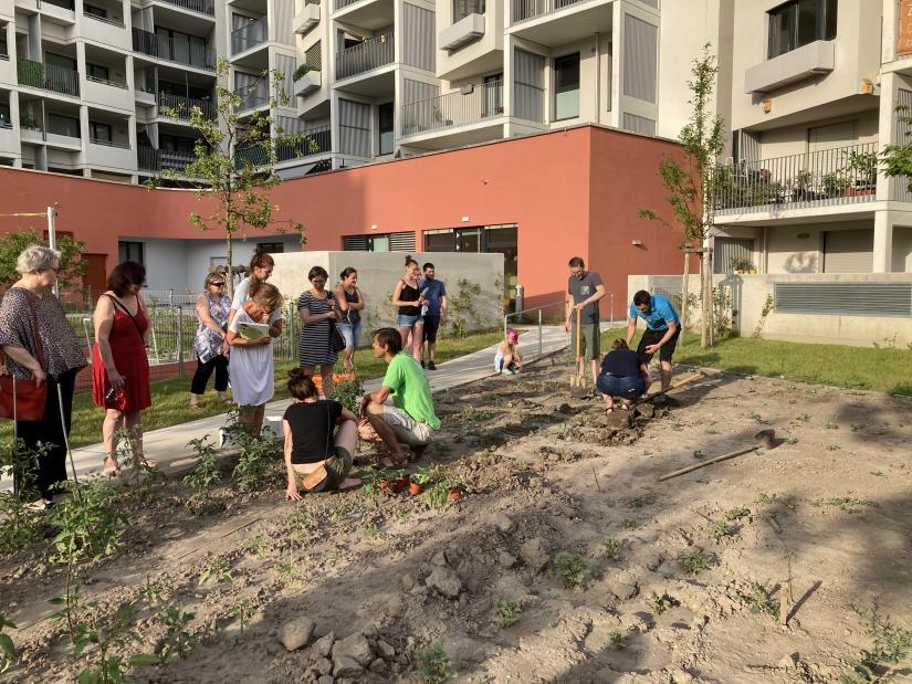 Gartenworkshop in Ernte Laa_Credit Caritas Stadtteilarbeit