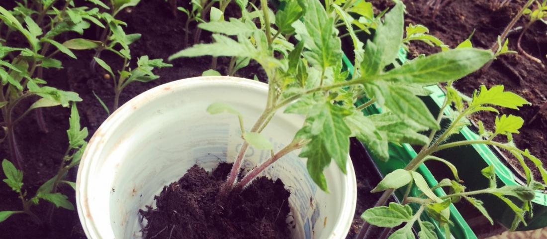 Tipps fürs Garteln im Biotop der Zukunft